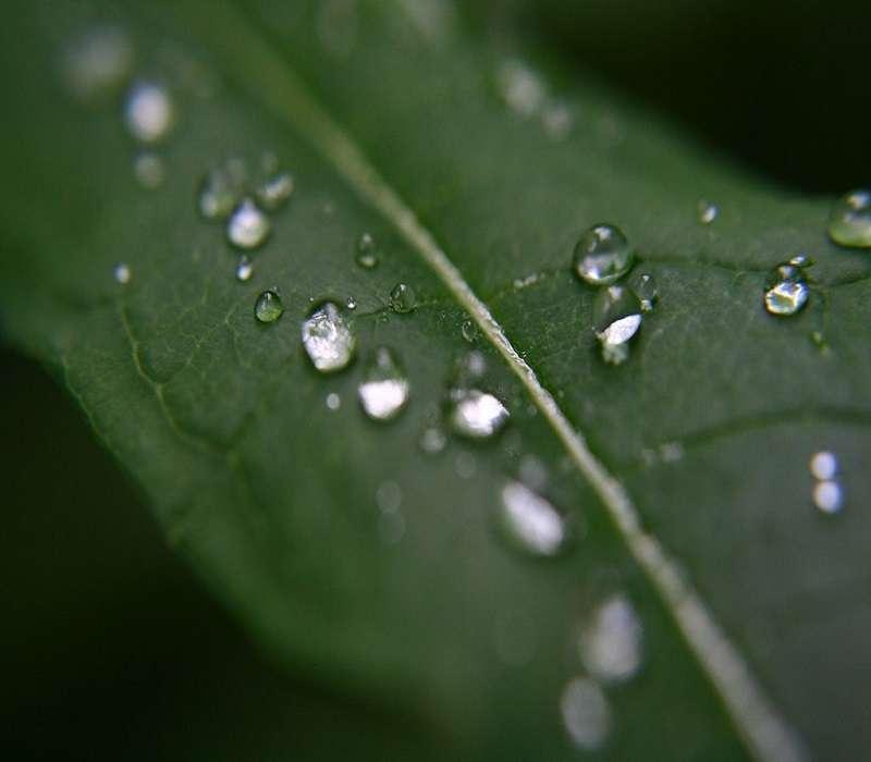 Ecco un materiale ecosostenibile che si ricava dalla cellulosa