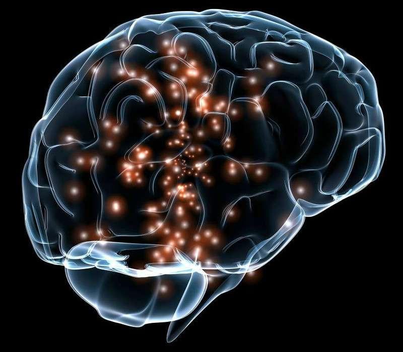 Nel cervello umano sono stati stimati circa 86 miiliardi di neuroni