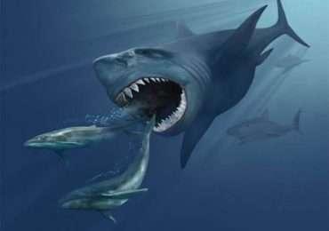 Lo squalo Megalodonte un gigantesco squalo vissuto nel Pliocene.