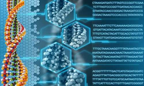Il codice genetico universale permette di tradurre le sequenze geniche in proteine