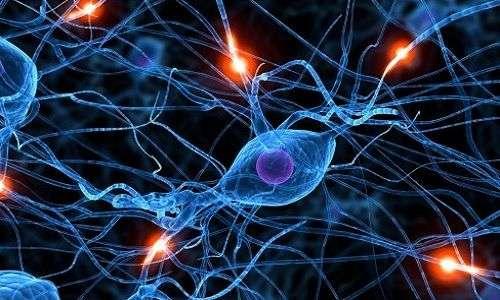 Le cellule staminali potrebbero ripristinare i neuroni morti.
