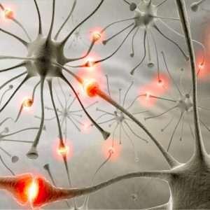 Le cellule staminali sono oggetto di grande interesse da parte della medicina rigenerativa.