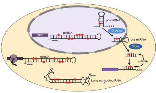 La biologia molecolare ha introdotto un concetto nuovo che non era mai stato contemplato dalla genetica proponendo l'esistenza di RNA non codificanti.