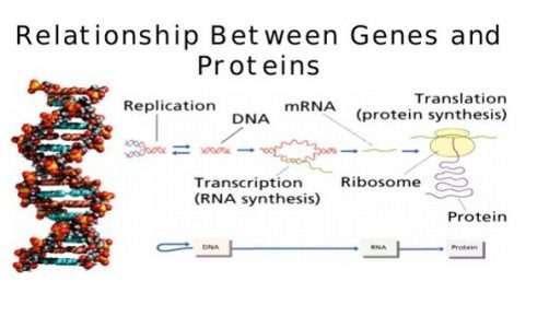 La genetica ha fornite le basi su cui la biologia molecolare ha sviluppato la propria ricerca sulla relazione tra geni e proteine