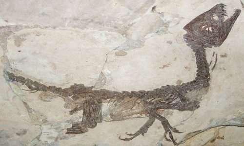 Nella foto è mostrato il fossile di un dinosauro, che secondo recenti scoperte poteva essere ricoperto da piume.