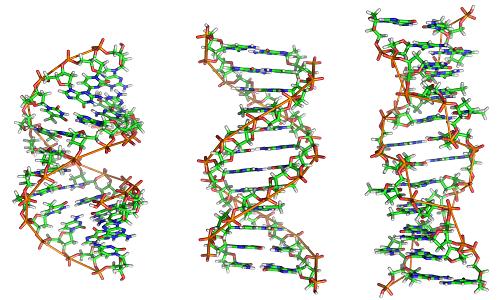 Il DNA può essere trovato in tre diverse forme, e ciascuna di esse è dotata di una struttura diversa.