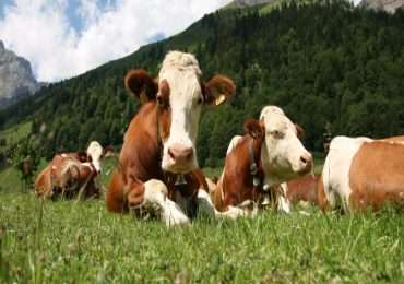L'allevamento intensivo è responsabile dell'incremento di gas serra.
