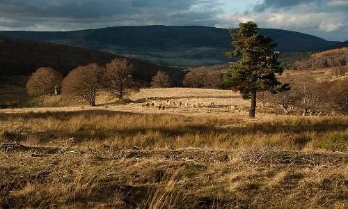Molte foreste vengono sacrificate a causa dell'allevamento intensivo