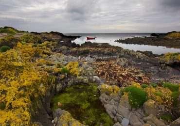 Grandi comunità di licheni epifitici ed epilitici che crescono su rocce, come mostrano le immagini.