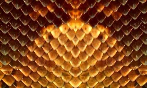 Il serpente rappresenta un pericolo per l'uomo e, in quanto tale, immagini simili per spettro visivo alla sua pelle potrebbero giustificare la tripofobia.