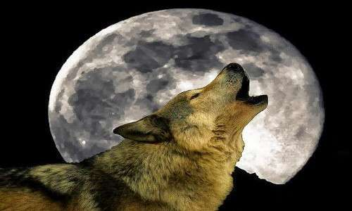 la luna piena è responsabile della trasformazione del licantropo in un vero e proprio lupo mannaro.