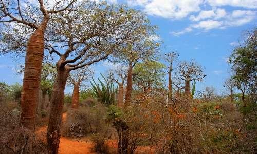 Ecosia aiuta moltissime comunità agricole nel mondo