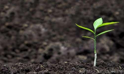 Ecosia pianta milioni di alberi ogni anno, stupefacente!
