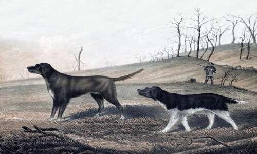 Il segugio è un cane da caccia.