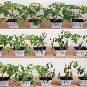 Studio di varie formulazioni di glifosato applicate sulle piante.