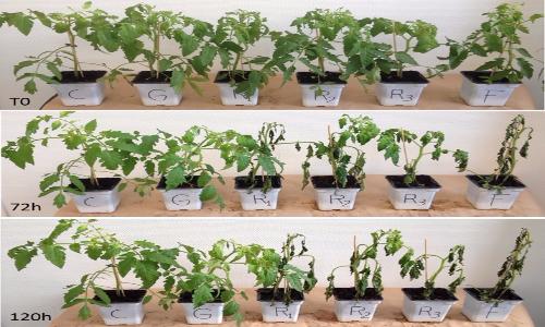 Studio di varie formulazioni di glifosato applicate sulle piante