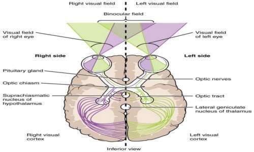 L'intero processo di visualizzazione rende straordinaria la risoluzione dell'occhio umano.