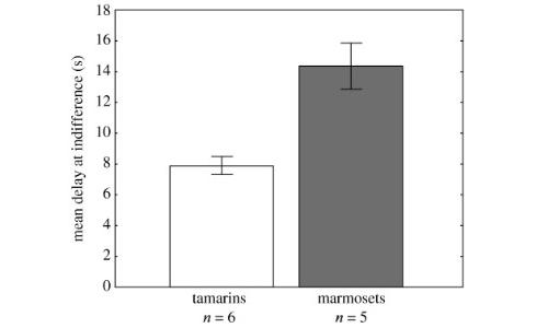 I dati raccolti dal test della pazienza effettuato su esemplari di uistitì e tamarini, in cui i primi risultano essere molto più disposti ad attendere.