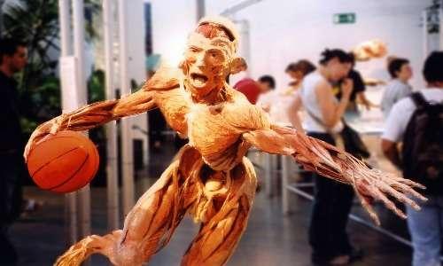 Esistono mostre sulla plastinazione in cui vengono esposti corpi umani bloccati in pose comuni