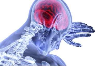 Quanto ne sai del cervello? IL nostro cranio è molto robusto così da proteggere il cervello: un organo di vitale importanza e molto complesso.