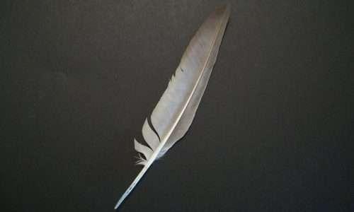 Una penna remigante primaria dell'oca poteva essere un ottimo sostituto allo stilus, e un predecessore della moderna biro.