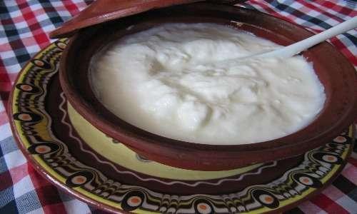 Tazza di yoghurt bulgaro che è stato realizzato facendo fermentare il latte per aggiunta di L. delbrueckii susp. bulgaricus, membro del gruppo dei lattobacilli.
