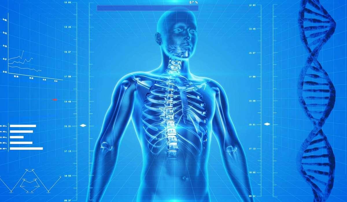 Conosci le misure del corpo umano? Se sei sicuro di sapere quane ossa ha un bambino oppure quanto è lungo il nostro intestino, allora questo è il quiz che fa per te.