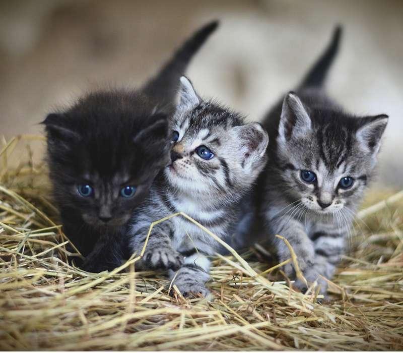 Ti piacciono gli animali? Se credi di conoscerle allora prova ad indovinare le curiosità sugli animali che li rendono così speciali per noi esseri umani e per tutta la natura.