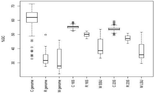 Boxplot raffigurante il GC% in funzione del rRNA in Caulobacter e Rickettsia. Il grafico è simile a quello che si potrebbe stilare per i protisti