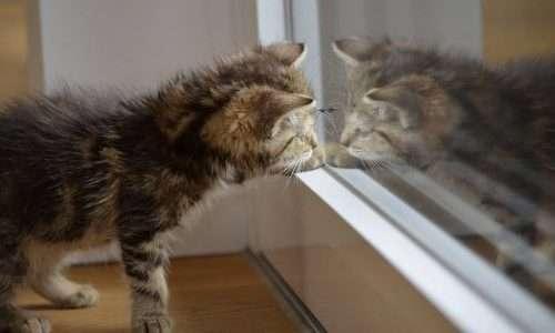 La mancanza di pieno riconoscimento di sé è parte del se di funzioni cognitive di cui sono dotati gli animali domestici.