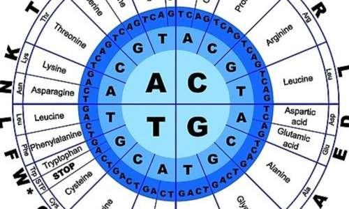 Il codice genetico espanso che prende il posto del codice genetico standard nella traduzione dei coloni di nonsense