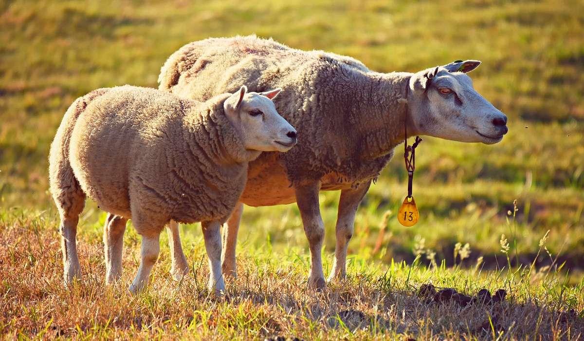 Da quale proteina è composta principalmente la lana?