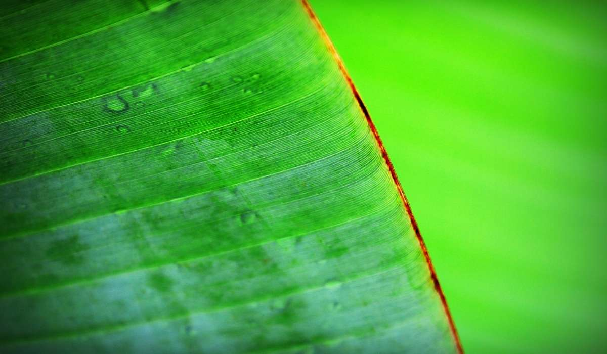 Quali di queste è una fase del processo detto fotosintesi clorofilliana?