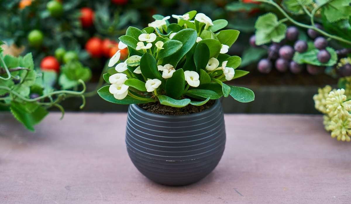 Quale di questi non è un tipo di pianta?