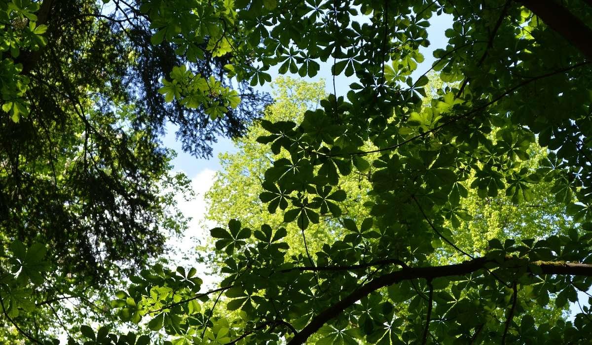 Quale tipo di pianta può essere annuale, biennale o perenne?