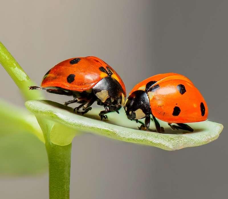 Domande sul mondo degli insetti, curiosità e caratteristiche generali su questi piccoli esseri viventi.