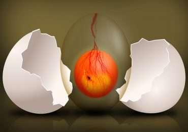 Quanto ne sai sull'embrione? Rispondi alle domande di questo quiz per testare le tue conoscenze sullo sviluppo della vita.