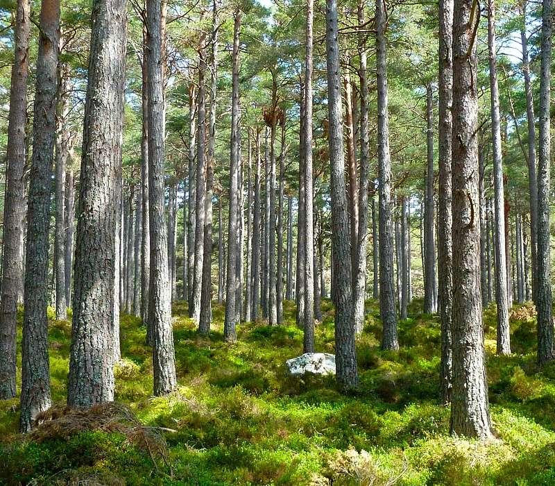 Conosci le piante? Ti senti un esperto del green che ricopre la Terra? Scoprilo rispondendo a queste domane.