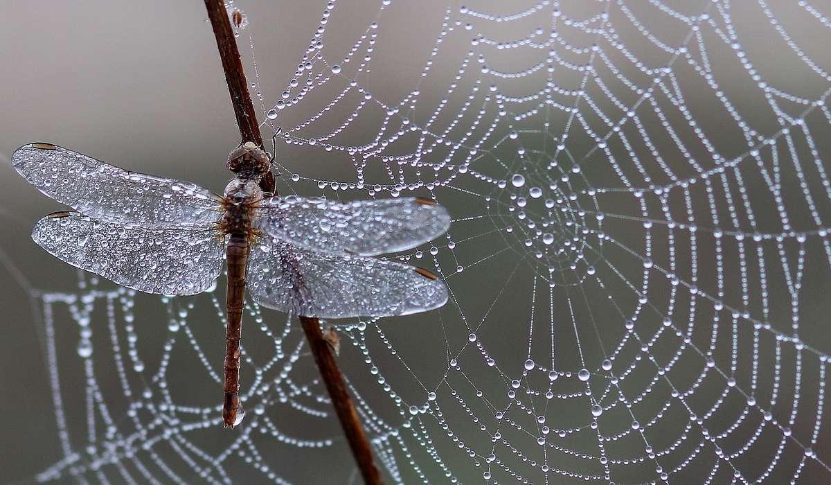 Le ali degli insetti sono escrescenze dell'esoscheletro, costituite principalmente da un materiale multistrato noto come cuticola.
