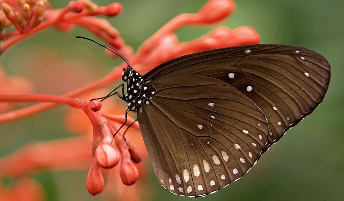 Le farfalle vivono al massimo un giorno.