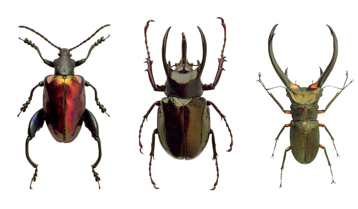 Il corpo degli insetti è suddiviso in tre segmenti: testa, torace e addome.