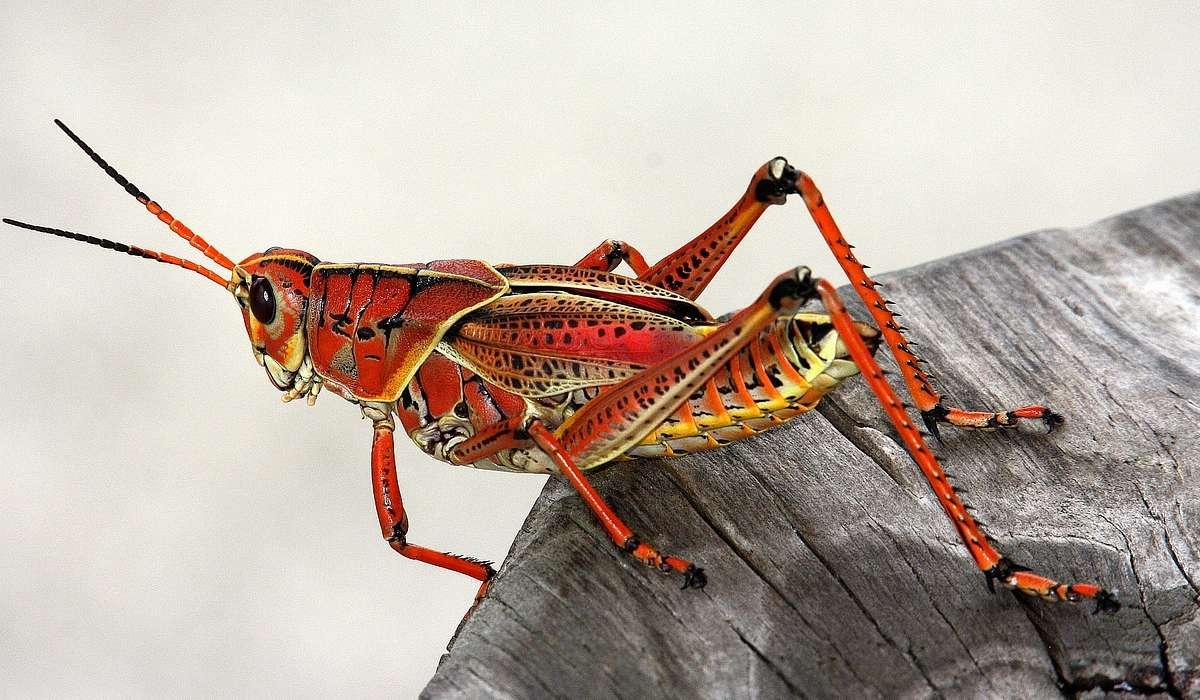 Gli insetti possono avere 5 o 9 zampe.