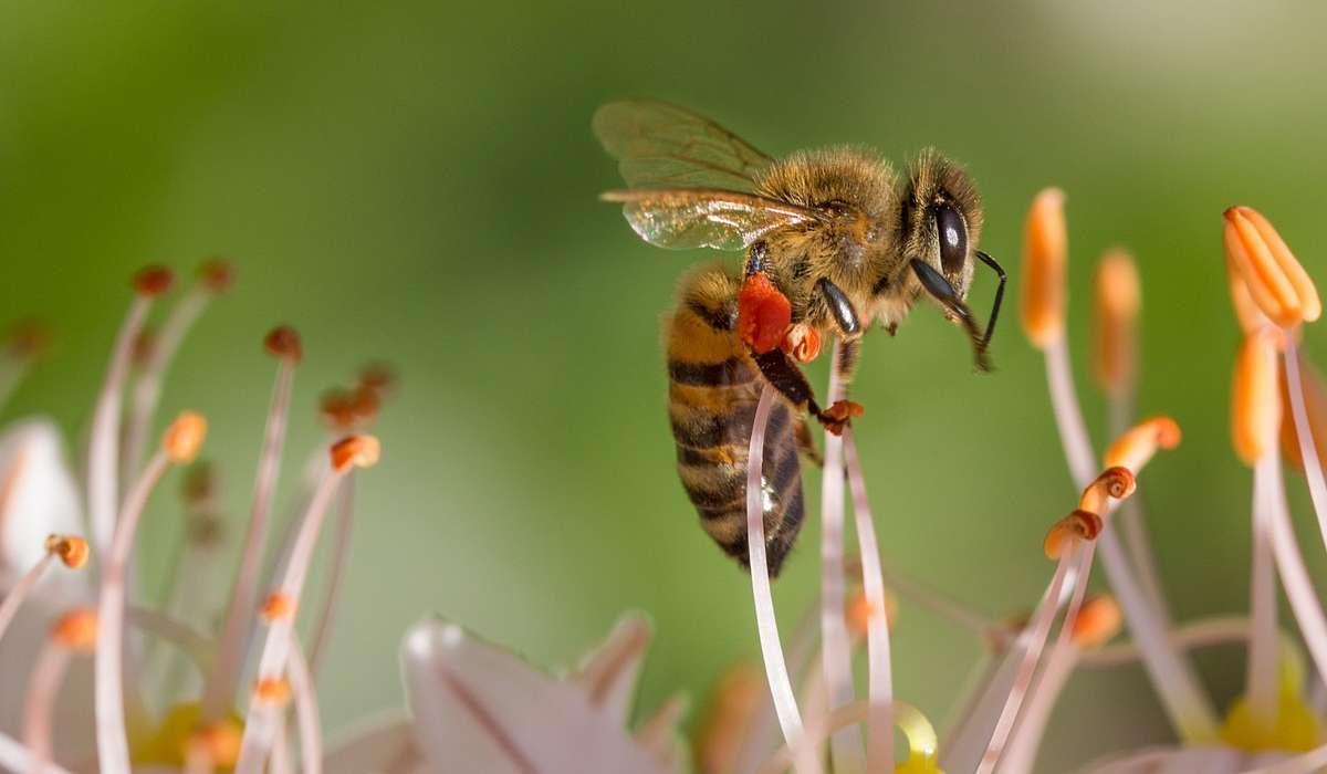 Le api usano il sole per orientarsi.