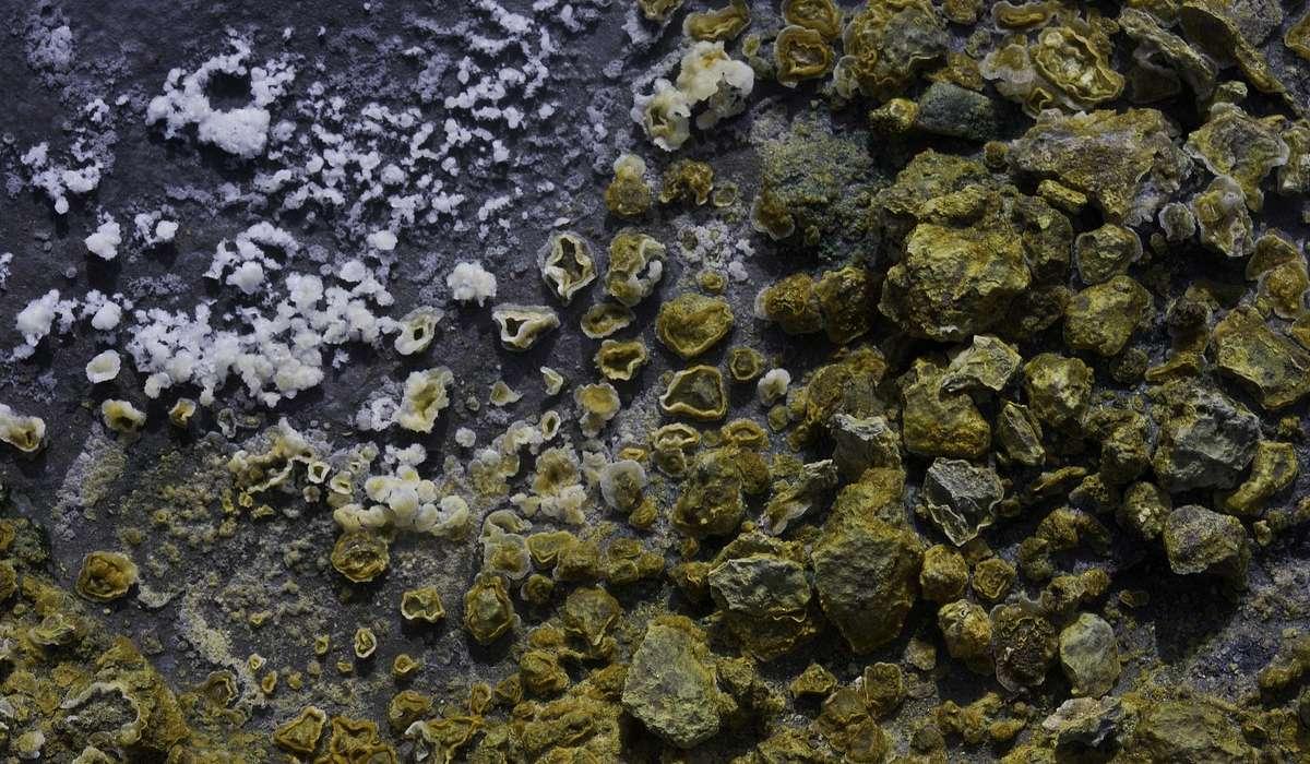 Dove si pensa si siano formate le prime forme di vita?