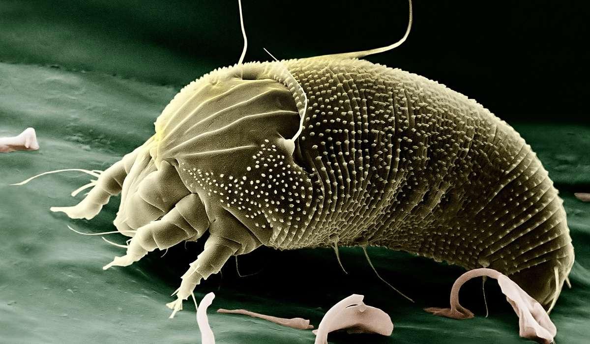 Qual è stata la prima tappa fondamentale per la costruzione del primo organismo vivente?