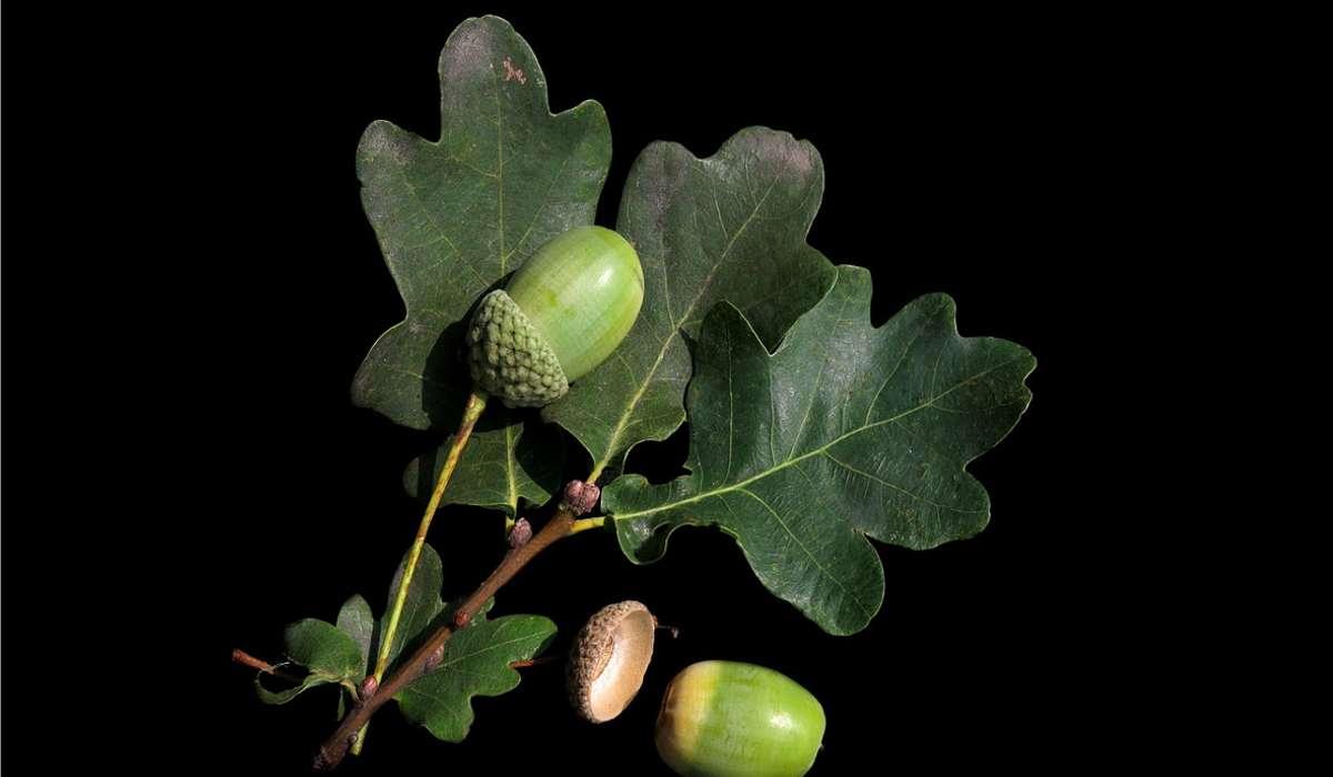 Un seme contiene anche l'embrione che riprodurrà la struttura della pianta futura.