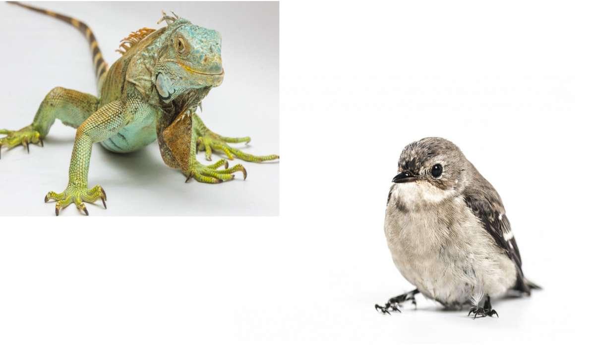 In uccelli e rettili con embrioni che si sviluppano in uova sgusciate, una membrana extraembrionica specializzata consente all'embrione di scambiare gas con l'aria nell'ambiente esterno.