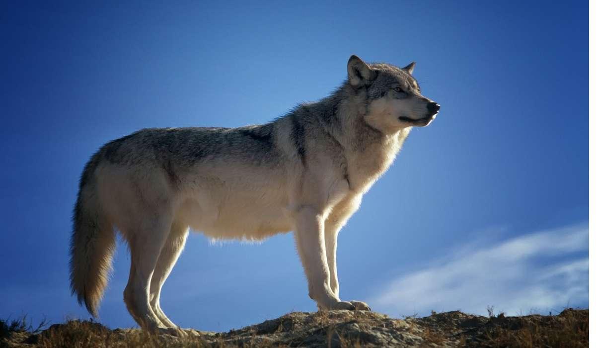 Il nome scientifico di un organismo, ad esempio Canis lupus per il lupo, che tipo di informazione fornisce?