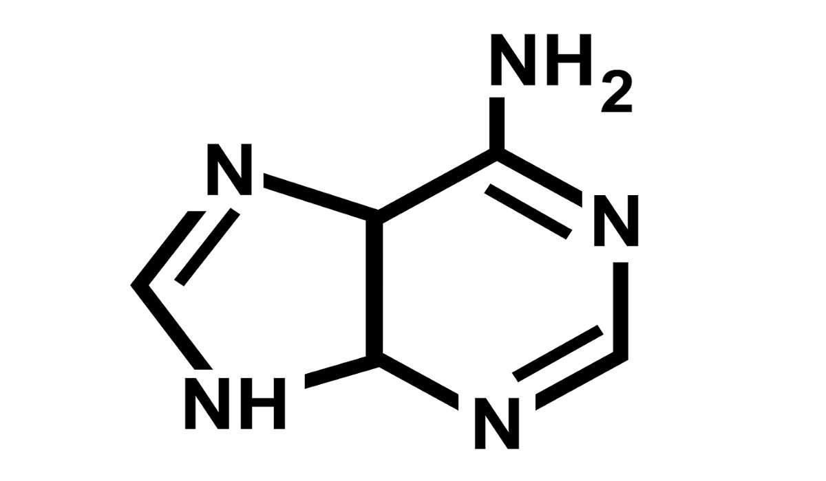 La base azotata chiamata Adenina con cosa si lega all'interno del DNA?