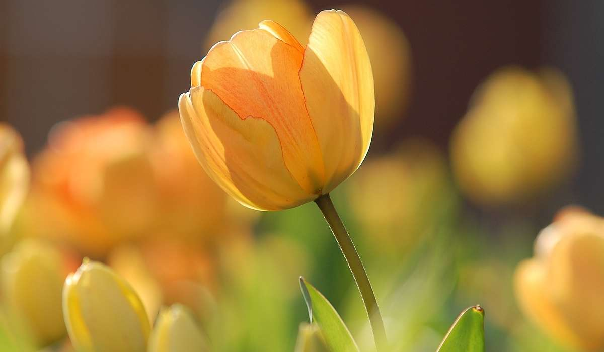 Che fiore è quello in figura?